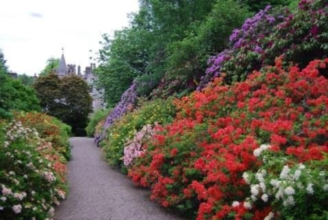 Dawyk Gardens