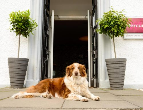 Barony Castle Hotel is pet friendly